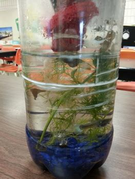biology ecosystem   bottle student activity