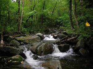 Headwater Streams   UNH Extension