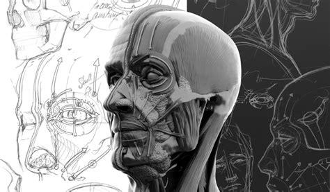 facial anatomy  artists filesilocouk
