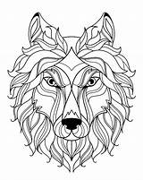 Coloring Wolf Wolves Simple Head Adult Animals sketch template
