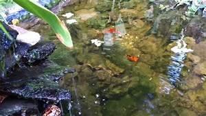 Ranas en estanque de peces wmv YouTube