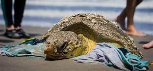 Close Encounter: Sea Turtle Stranding in Florida ...