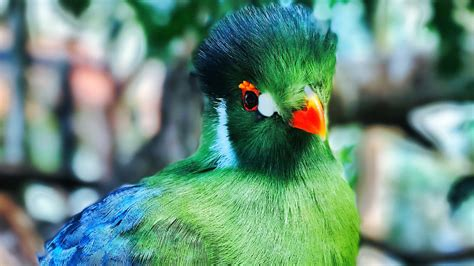 baby parrot child pics hd wallpapers
