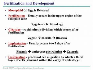 Human Reproduction System