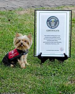 Yorkshire terrier who helps provide help for vulnerable ...