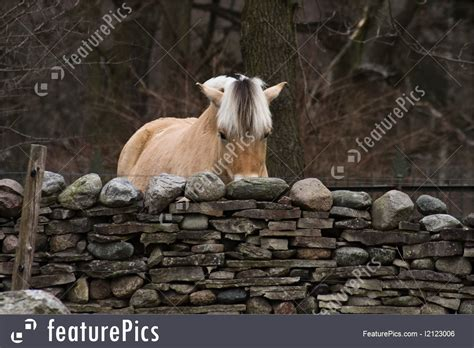 horse alone aged behind standing stone