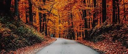 Autumn Foliage Road Asphalt Turn 1080p Dual
