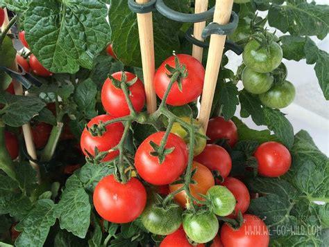 tomaten selber ziehen im eierkarton gewaechshaus