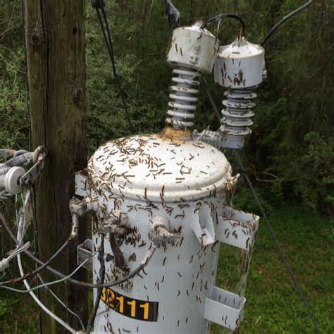 tent caterpillar swarms causing power outages  houston