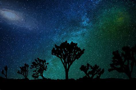 Wallpaper Starry Sky Milky Way Joshua Tree Hd