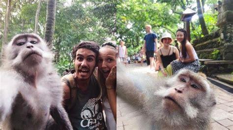 foto viral monyet selfie bareng wisatawan  bali minat