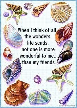 seashell poems  quotes quotesgram