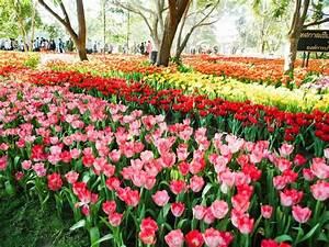 Tulpen Im Garten : sch ne tulpen im garten blumen im winter stockfoto ~ A.2002-acura-tl-radio.info Haus und Dekorationen