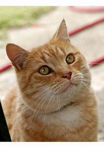 Foto, Katze, -, Kostenlose, Fotos, Zum, Ausdrucken