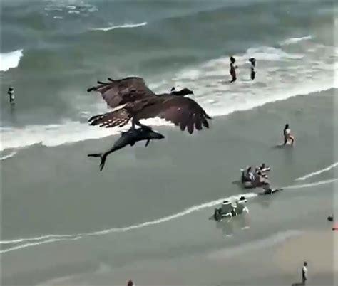 VIDEO: iespaidīgs putns virs atpūtnieku galvām ASV aiznes ...
