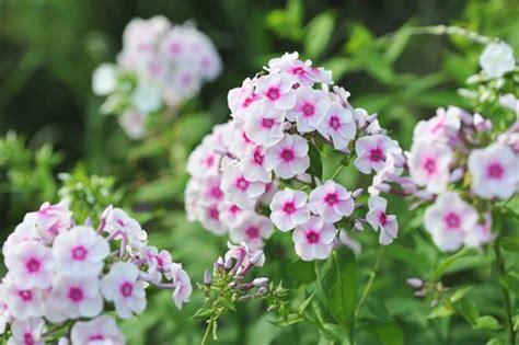Kubelpflanzen Sonniger Standort Winterhart Winterharte K