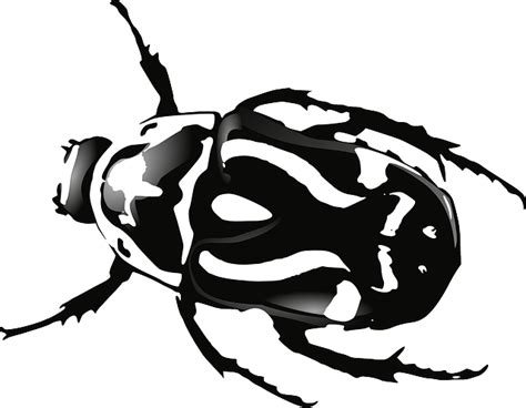 beetle clipart black and white beetle bug black 183 free vector graphic on pixabay