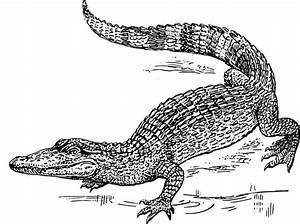 Crocodile Clip Art at Clker.com - vector clip art online ...