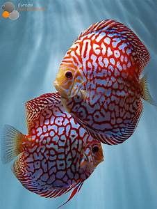 Best 25+ Tropical fish ideas on Pinterest   Pretty fish ...