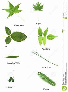 Various Leaves Stock Image