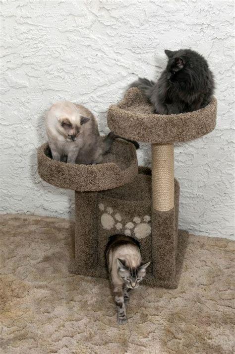 larbre  chat  terrain daventures  de repos pour