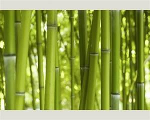 Bambus Pflanzen Sichtschutz : balkon sichtschutz aus bambus praktische und originelle idee ~ Markanthonyermac.com Haus und Dekorationen