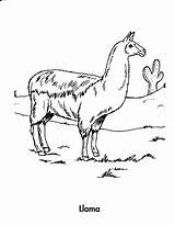 Llama Coloring Pages Printable Animals Earth Awesome Sheet Planet Animal Print Did Archive Know sketch template