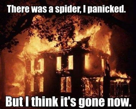 Afraid Of Spiders Meme - how to identify and overcome arachnophobia panther pest control