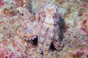 Incredible camouflage materials inspired by octopus skin ...