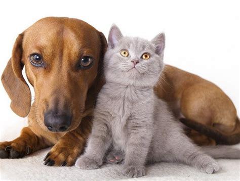 Cik tavam sunim vai kaķim ir cilvēku gadi? - Spoki