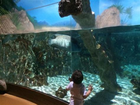 aquarium marne la vallee prix esculturas submersas photo de aquarium sea val d europe marne la vall 233 e tripadvisor