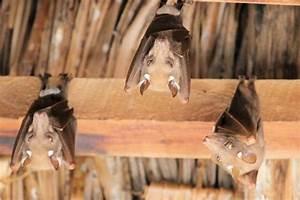 Marder Unter Dem Dach : ungebetene tiere im dach befestigungsfuchs blog ~ Frokenaadalensverden.com Haus und Dekorationen