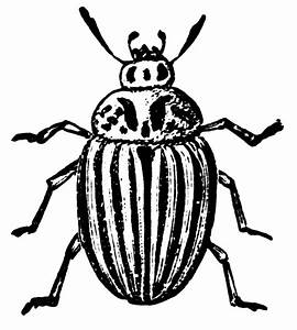 Beetle Clipart - Cliparts.co