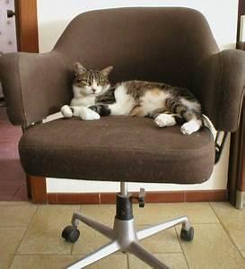 Arbre à Chat Fait Maison : arbres a chats pour ou contre ~ Melissatoandfro.com Idées de Décoration