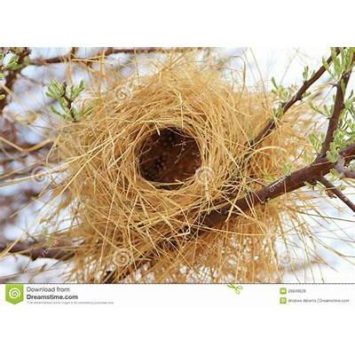 Bird's Nest - Buffalo Weaver Africa Stock Photo Image