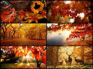 fall season on Tumblr