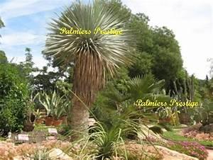 Plantes Pour Jardin Japonais Exterieur : plante aromatique archives page 2 of 15 fleur de passion ~ Premium-room.com Idées de Décoration