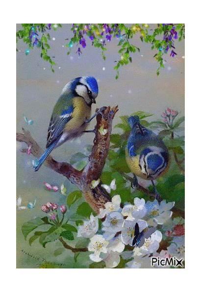 Birds Happy Picmix Gifs Spring Bird Birthday
