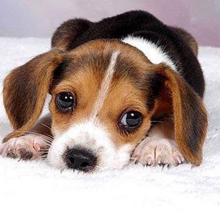 puppy cries  night   overcome