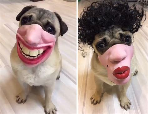 dont buy  amazon dog masks