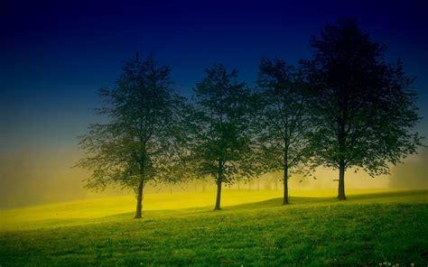 Beautiful Tree Wallpaper For Desktop by Tree Wallpaper Beautiful Hd Hd Desktop Wallpapers 4k Hd
