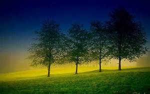 tree wallpaper beautiful hd