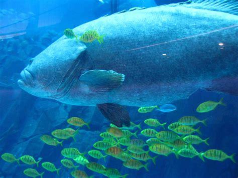 Bid Fish Big Fish Toxic Culture