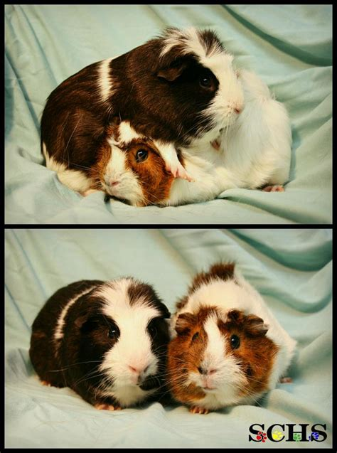 orville and wilbur are quite the pair as you can