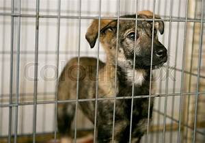 Sad puppy in a cage of a shelter for homeless animals ...