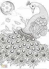 Peacock Coloring Printable Simple Adult sketch template