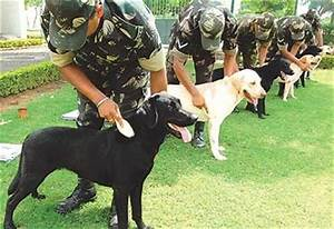 Army dogs in training | Cute, Cool, or Beautiful Pics ...