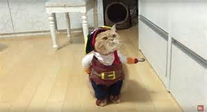 pirate costume for cats cat dressed as a pirate is the best thing we ve seen