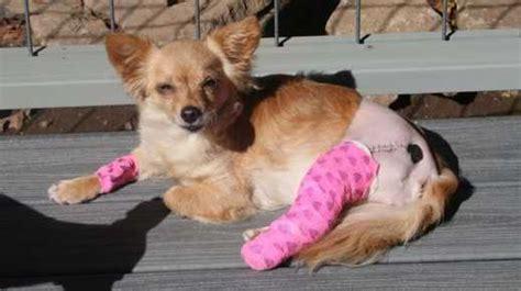special  medical program dogma animal rescue