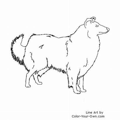 Collie Rough Coloring Pages Dog Own Drawings